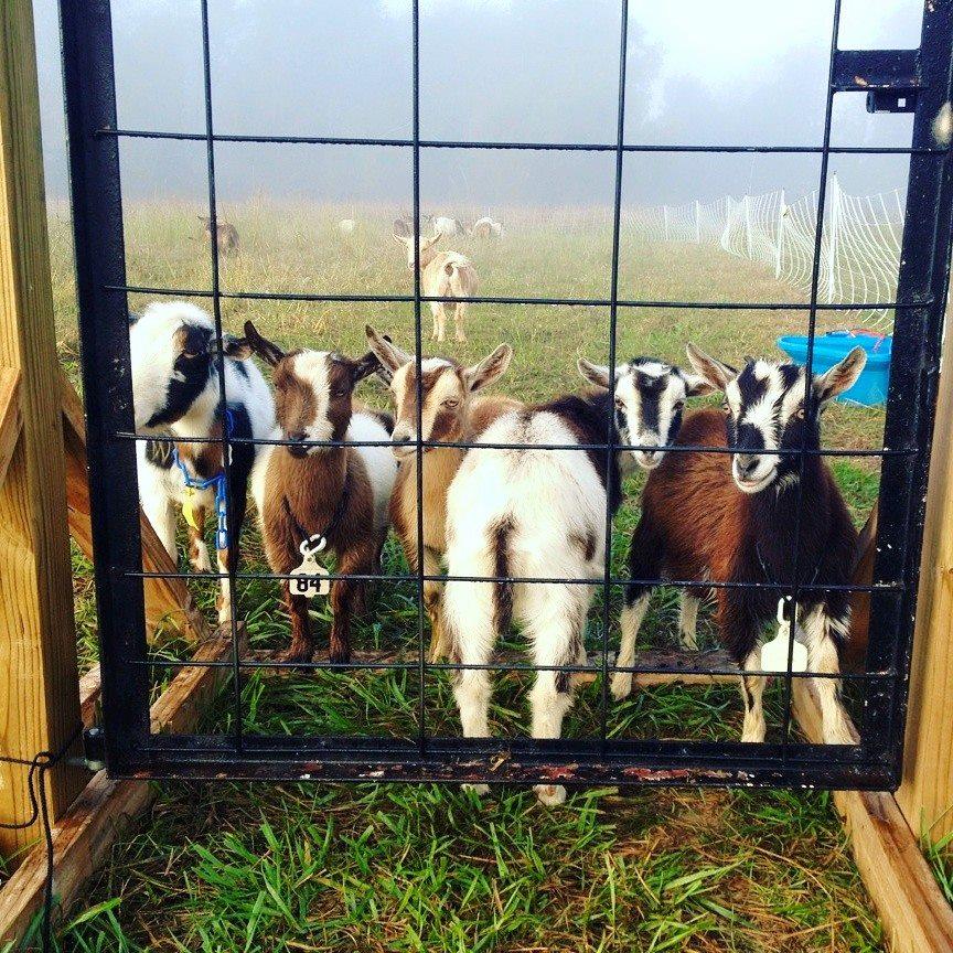 Ozark Natural Foods announces 2016 Farm Tourto help NWA residents meet local farmers and vendors