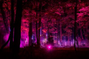 north forest lights